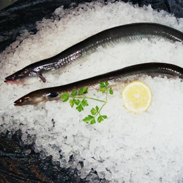 Aal ohne Haut ca. 500g. küchenfertig